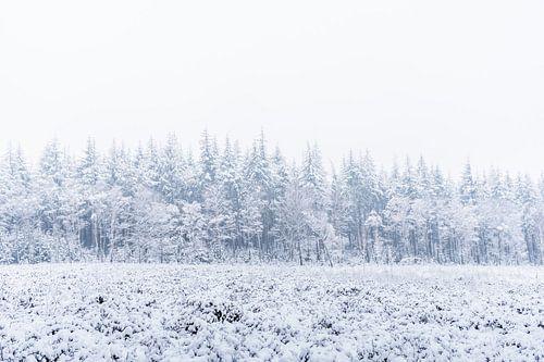 De natuur in het wit