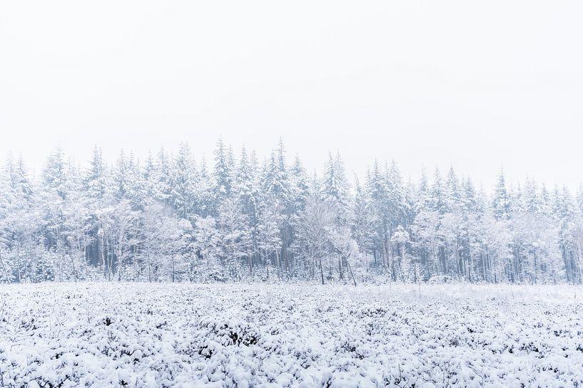 La nature en blanc sur Albert Lamme