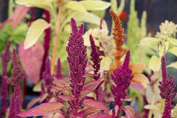 Fleurs sauvages botaniques vertes, violettes et oranges sur Tot Kijk Fotografie: natuur aan de muur