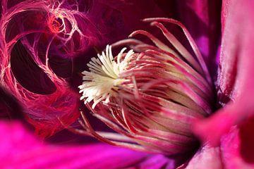 Coeur d'éclairs roses von Christine GUILLET