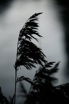 De wind van Mart van Zwam