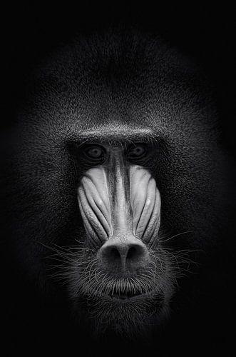 Dark animal Portrait