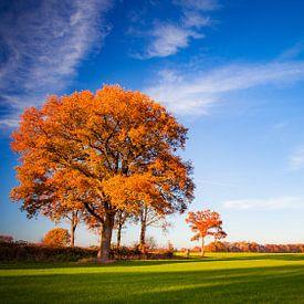 Herfst in Twente van Freddy Hoevers