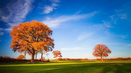 Herfst in Twente van