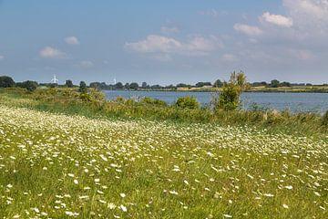 Sommerwiese in Ostfriesland van Rolf Pötsch