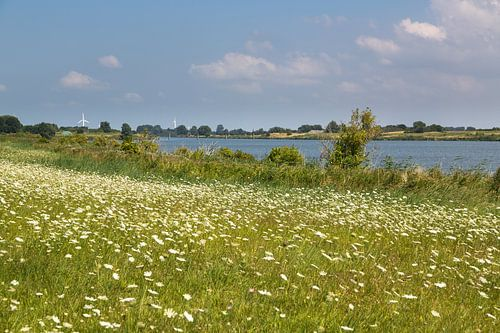 Sommerwiese in Ostfriesland