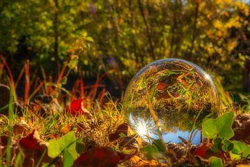 Herbstkugel von Dagmar Marina