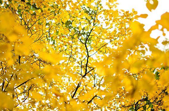 Gele bladeren in het park van Ricardo Bouman | Fotografie