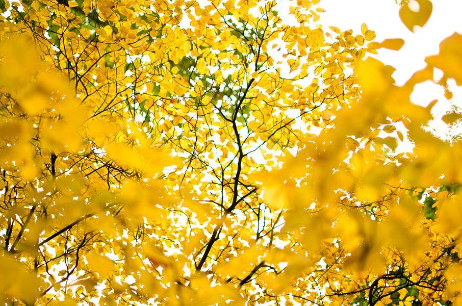 Gele bladeren in het park