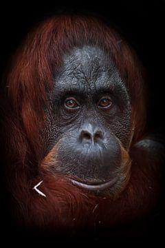Het intelligente gezicht van een orang-oetan-filosoof met rood haar tegen een donkere achtergrond. van Michael Semenov