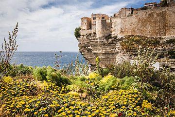 Blumen am Meer von Voorbeeld Fotografie