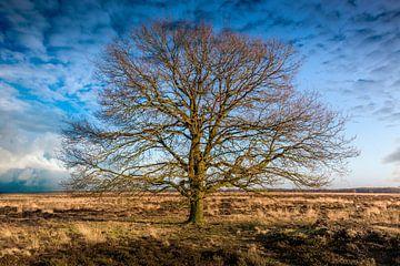 Tree von Arjen Dijk