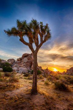 Charmante zonsondergang in Joshua Tree National Park van Melanie Viola