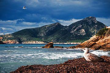 Mallorca - Sa Dragonera von Alexander Voss