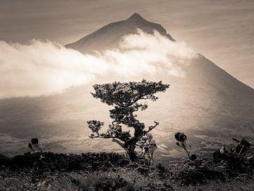 Der Berg und sein Baum von Alexander Dorn