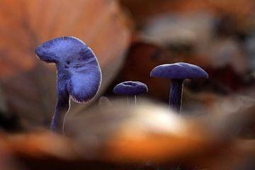 Herbstliche Atmosphäre 01 von Cees van Gastel
