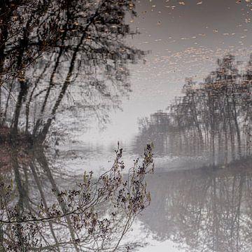 Geheimzinnige spiegeling van bomen in water