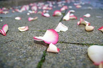 Rozenblaadjes op het voetpad van
