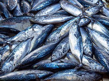 Een foto vol vis van Rik Pijnenburg