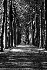 Bosweg van