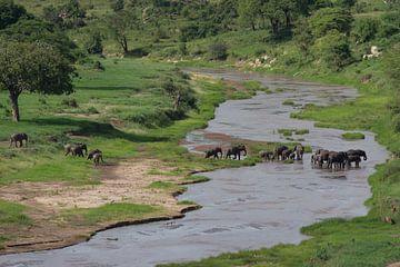 Een troep olifanten steekt een rivier over van Peter van Dam