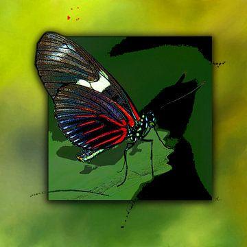 Vlinder. Rode mormoon. van Dirk H. Wendt