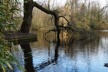 geknakte boom hangend in het water van wil spijker