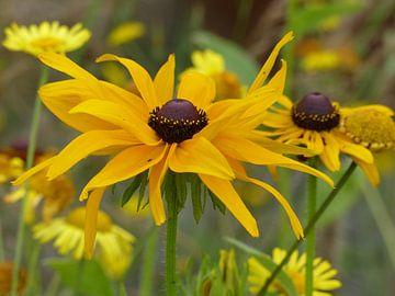 gele bloemen van Gonnie van Hove