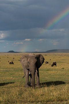 Olifant onder de regenboog van Ingrid Sanders