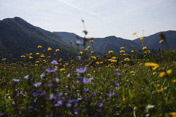 Blumen mit Bergen im Hintergrund von Steven Marinus