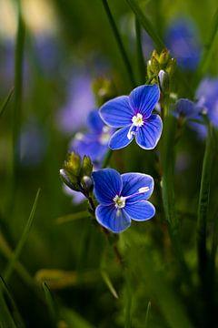 Ereprijs bloemetjes van Nynke Altenburg