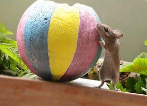 Schuftende Maus von Heike Hultsch