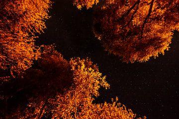 Sterne Fluss von Ellis Peeters