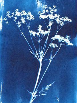 Cyanotype wilde bloem van Karin van der Vegt