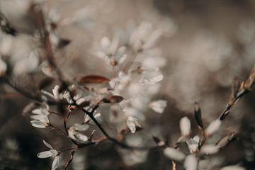 Blumen mit Details von Sanne van Pinxten