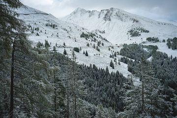 Les pins blancs sur Sonny Vermeer