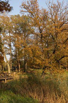 water met bos in herfstkleuren in de veluwe van Compuinfoto .