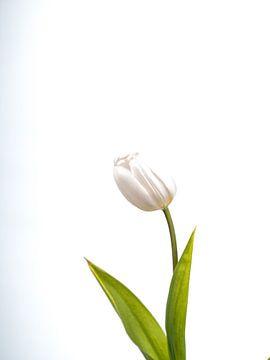 tulp art van Dietjee FoTo