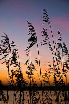 silhouet riet, zonsopkomst van Nynke Altenburg