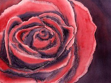 Die rote Rose von Natalie Bruns