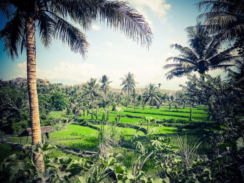 Rice Terraces, Lombok Indonesië van Wilco Verhaegh