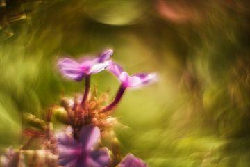 Des fleurs colorées