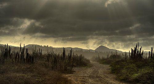 Cactus Field Bonaire van M DH