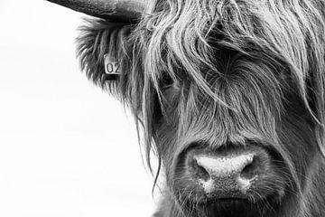 Portrait Scottish Highlander Schwarzweiss von Sandra van Kampen