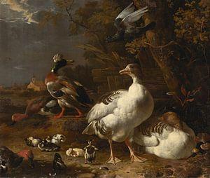 Melchior d' Hondecoeter, Ganzen en eenden