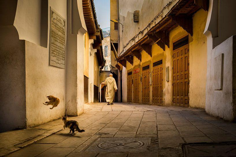Spelende katten in Fez, Marokko van Paula Romein