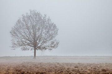 Boom in de mist von Anne Reitsma