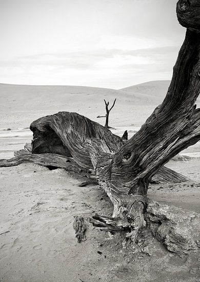 Dood hout in Deathvlei Namibië van Jan van Reij
