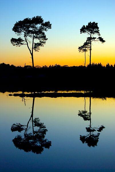 Japanse bomen van Douwe Schut