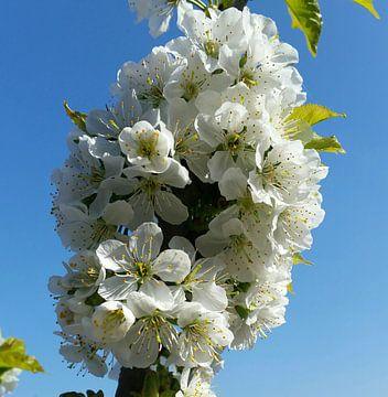 Blumen blühen lassen von Frans Versteden
